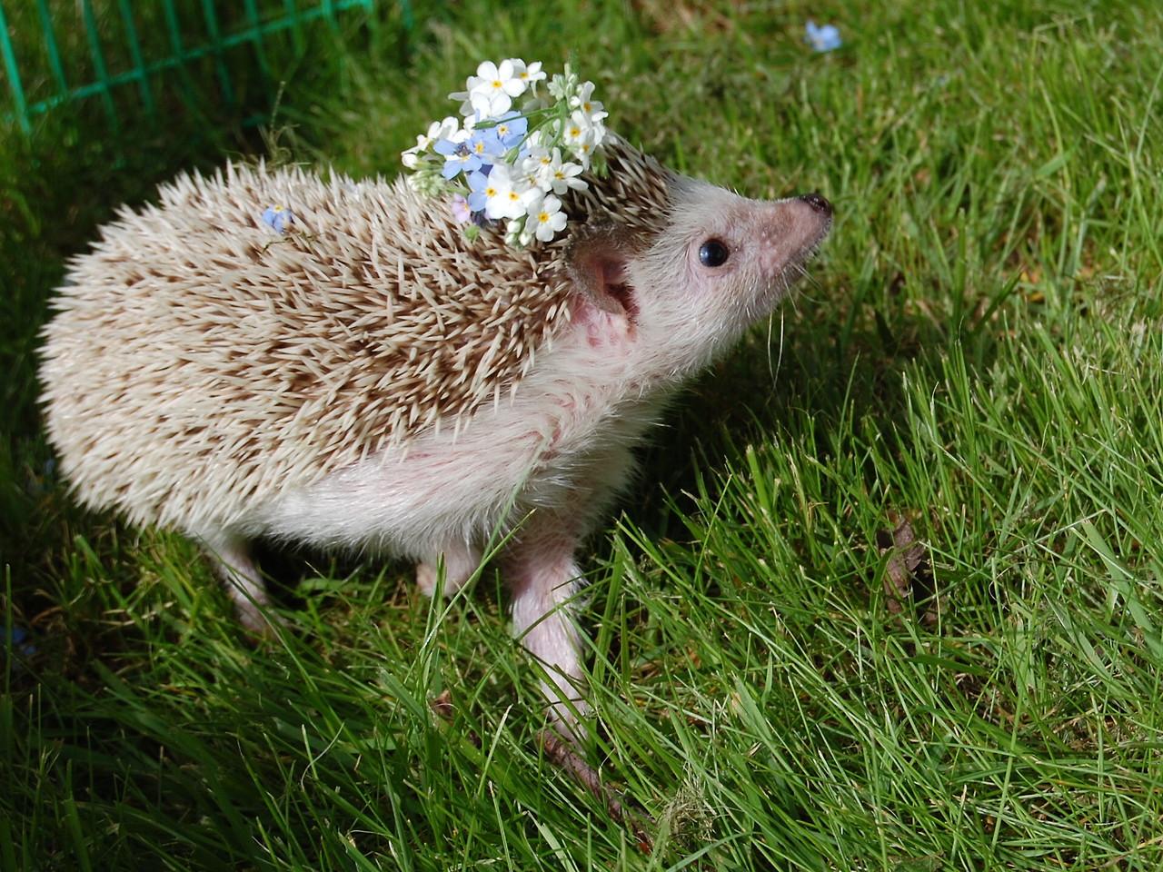 hedgehog flower wreath