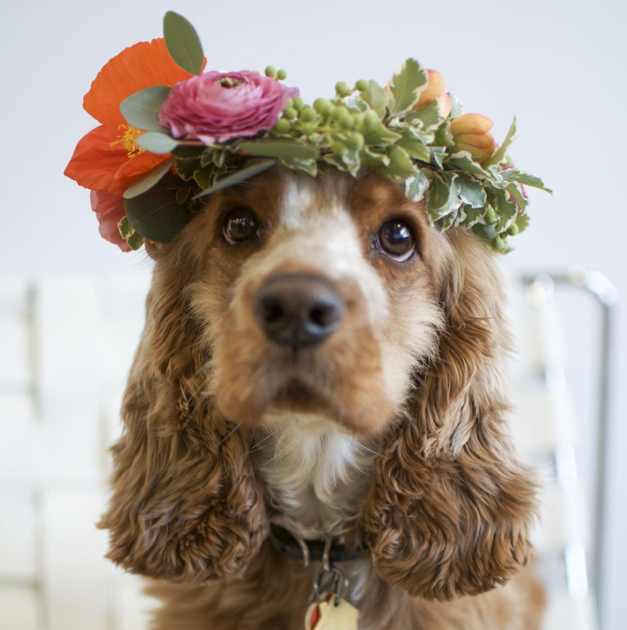 dog flower wreath crop