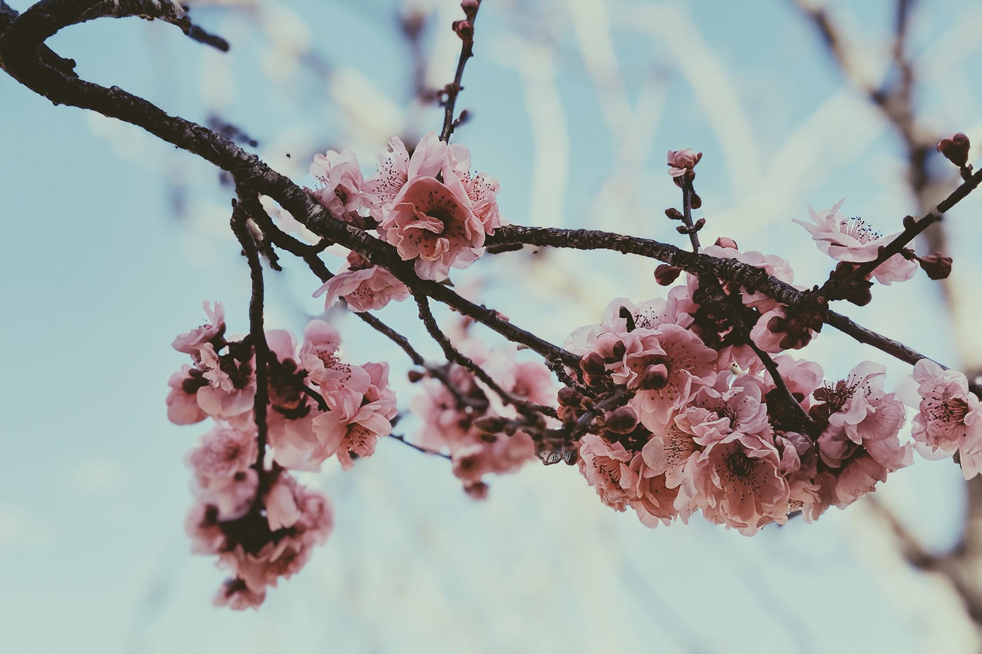 Winter Chill vs Spring Sunshine – Nordic Playlist